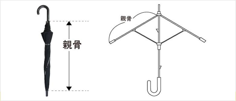 親骨の解説図